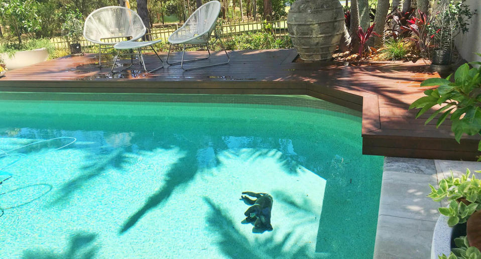 The koala was found laying motionless at the bottom of the Gold Coast pool. Source: Facebook/Wildcare Australia Inc.
