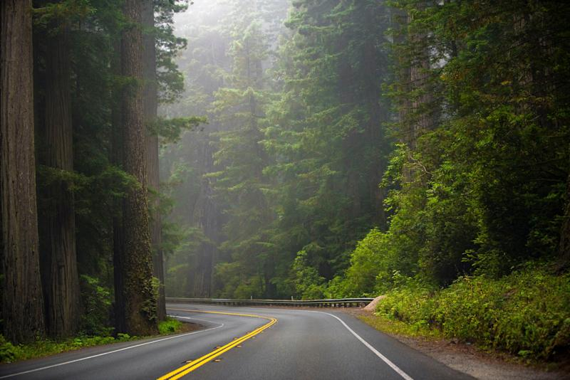 A road running through the iconic Sequoias in Redwood National Park, California.
