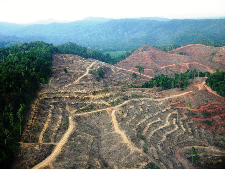 Deforestation in Sumatra, one of the world's primate hotspots: W F Laurance