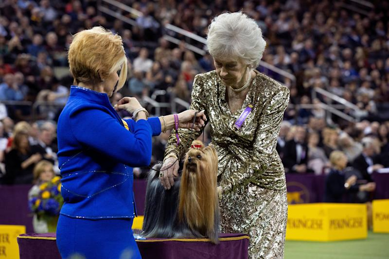 "Toy group judge Sharon Newcomb examines Yorkshire terrier ""Karma's Promise Key-Per"" during the toy group judging at the 143rd Westminster Kennel Club Dog show at Madison Square Garden in New York, Feb. 11, 2019. (Photo: Caitlin Ochs/Reuters)"