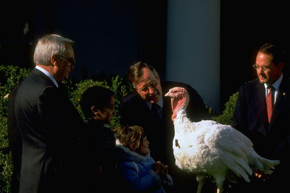 "<p>The tradition of gifting turkeys to <a href=""https://www.goodhousekeeping.com/life/career/g3918/presidents-before-and-after-office/"" rel=""nofollow noopener"" target=""_blank"" data-ylk=""slk:U.S. presidents"" class=""link rapid-noclick-resp"">U.S. presidents</a> has existed since the <a href=""https://www.whitehousehistory.org/pardoning-the-thanksgiving-turkey"" rel=""nofollow noopener"" target=""_blank"" data-ylk=""slk:late 1800s"" class=""link rapid-noclick-resp"">late 1800s</a>, but when George H.W. Bush took office, he began the now-annual ceremony in which the turkeys are pardoned and sent to a farm to live out their lives.</p>"