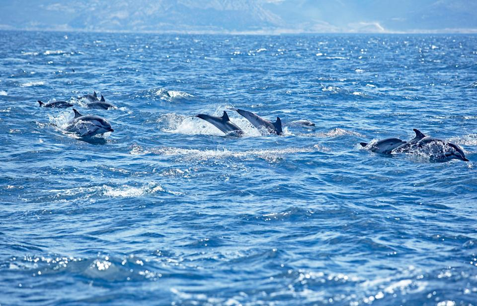 You can spot dolphins off shore - GETTY