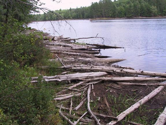 Low water levels at Fallison Lake, Wisc., in 2007, exposed previously submerged wood on the shoreline.