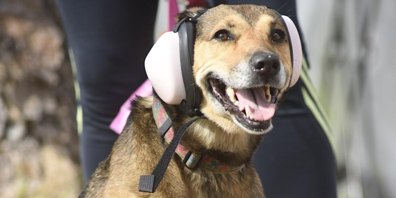 Spotify Will Generate a Playlist for Your Pet