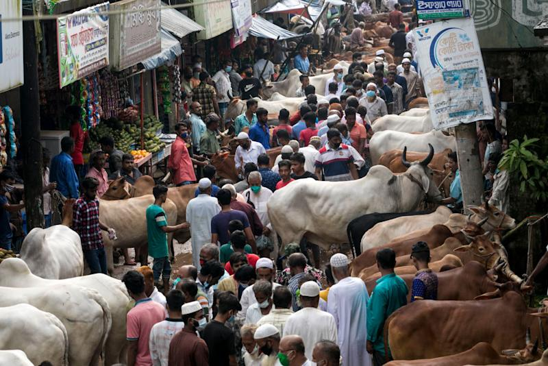 Photo shows people at cattle at a market in Bangladesh.