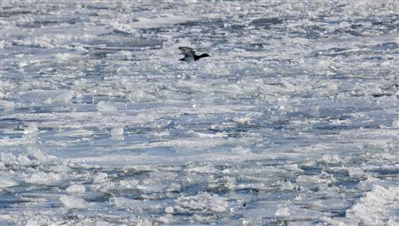 A duck flies over the frozen waters of the port of Milwaukee as another round of arctic air blasts the midwest keeping the wind chill in the negative numbers, in Milwaukee, Wisconsin February, 6, 2014. REUTERS/Darren Hauck