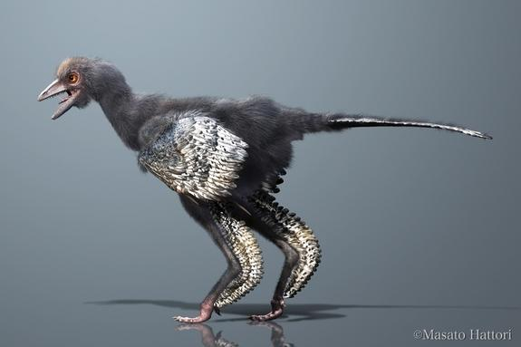 A birdlike dinosaur from the Middle/Late Jurassic of China could be the first of the bird group.