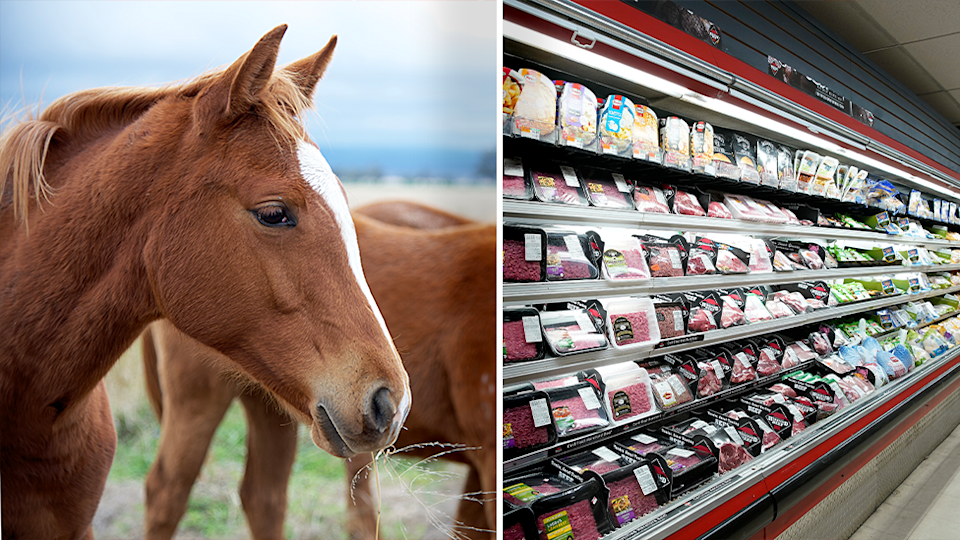 Horse meat has been linked to the deaths of 21 dogs in Victoria. Source: Getty - File
