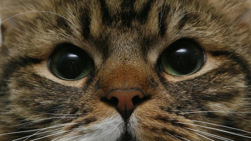 Narrowing your eyes can help build a bond with your cat, study suggests