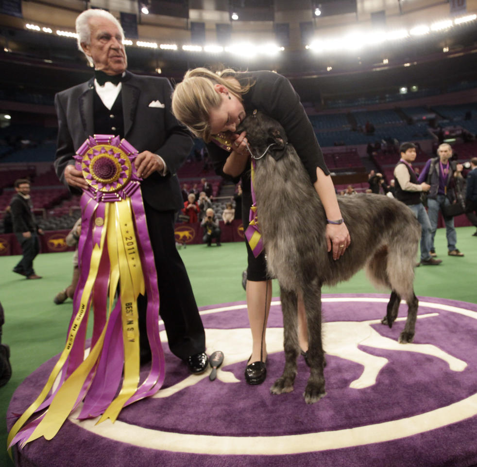 Scottish deerhound Hickory poses for photographs with his handler, Angela Lloyd, right, and judge Paolo Dondina after Hickory won best in show during the 135th Westminster Kennel Club Dog Show, Tuesday, Feb. 15, 2011, at Madison Square Garden in New York.