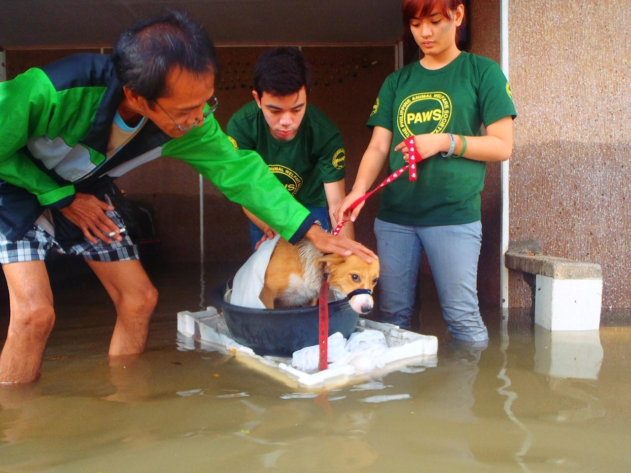 PAWS volunteers used basins and styrofoam containers to rescue stranded dogs in Cainta