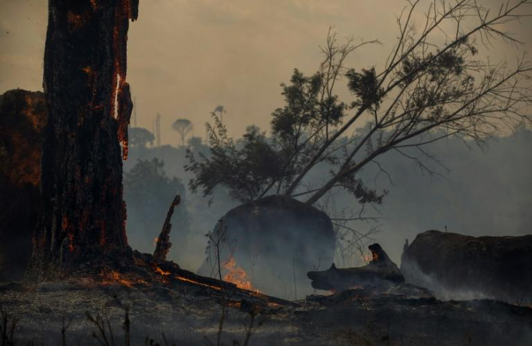 Deforestation in the Amazon has been blamed for the sharp increase in fires as land is cleared and burned for cattle grazing or crops (AFP Photo/Joao LAET)