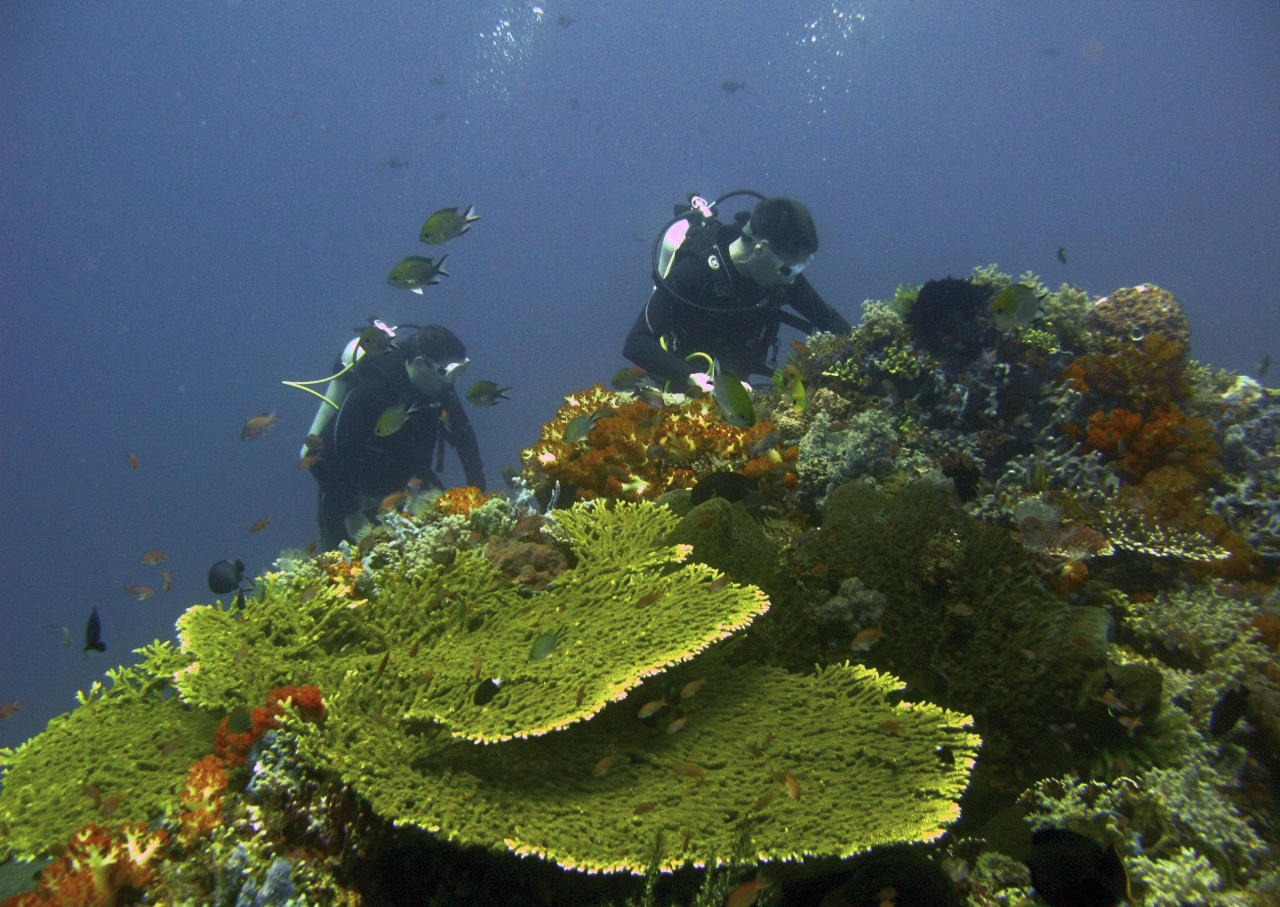 Divers explore a coral reef in Komodo island, Indonesia, May 6, 2009. Southeast Asia's biologically diverse coral reefs will disappear by the end of this century, wiping out coastal economies and sparking civil unrest if climate change isn't addressed, conservation group WWF said on Wednesday. Picture taken May 6, 2009.  REUTERS/Nila Tanzil  (INDONESIA ENVIRONMENT)
