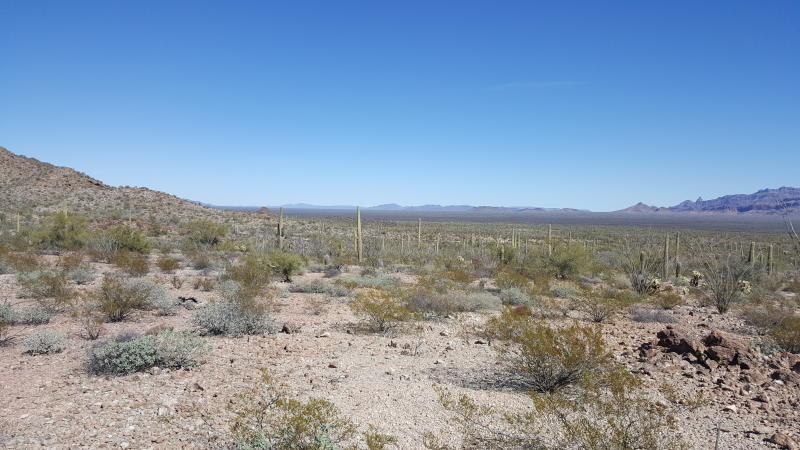 Over 1,400 Migrants Have Been Abandoned by Smugglers in Arizona's Harsh Sonoran Desert