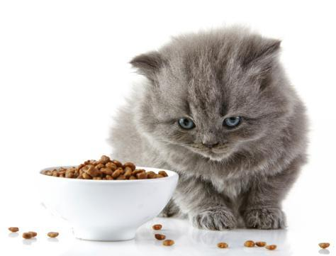 Many pet parents become concerned that their fussy-eater will go hungry or will not receive the proper nutrition necessary to be healthy. Unfortunately no 'trick' to feeding a fussy pet but it does help to trying different foods, warm the food to body temperature, and staying with your pet when while they eat. Even petting, in conjunction with vocal reassurance, may be all that is necessary to induce eating.  If your pet has only recently become fussy about their food, or your pet's appetite suddenly changes, this could indicate illness and maybe even disease so a visit to their vet is advised.