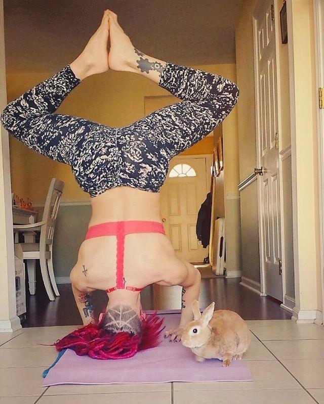 "<p>Headstands take a lot of practice to master, but having a <a href=""http://www.drozthegoodlife.com/healthy-lifestyle/mental-health/g135/sleep-facts-snoozy-animals/"" rel=""nofollow noopener"" target=""_blank"" data-ylk=""slk:fluffy bunny"" class=""link rapid-noclick-resp"">fluffy bunny</a> at your side could be great encouragement.</p>"