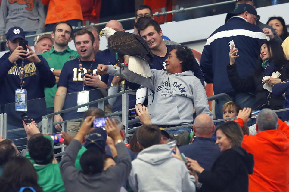 An eagle blessed the Irish prior to the Cotton Bowl. (Getty Images)