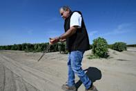 Dowser David Sagouspe demonstrates his technique for finding underground water sources using a V-shaped olive wood branch on a farm in Fresno, California