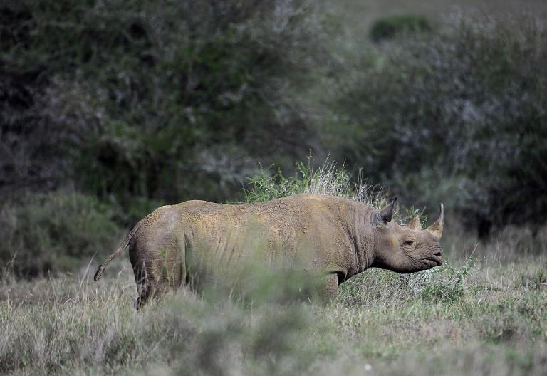 There are around 5,000 black rhino left in Africa with South Africa's population sitting at 1,893, according to the International Union for Conservation of Nature