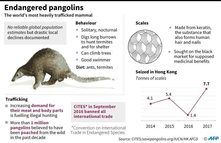 Graphic on pangolins, the world's most heavily trafficked mammals