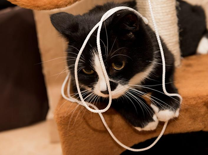If your pet ingests string, it could cause a major medical issue.