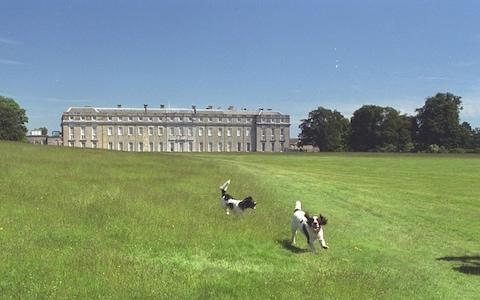 Petworth House  - Credit: Eleanor Bentall