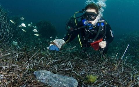 Plastic breaks down in the water to create tiny pieces of microplastic which can be easily ingested