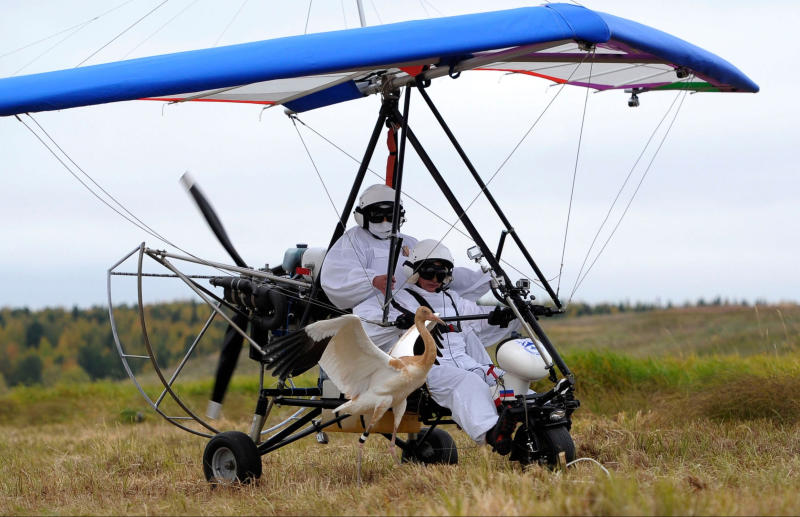 "FILE - In this Wednesday Sept. 5, 2012 file photo, Russian President Vladimir Putin (front seat) watches from a motorized hang glider as a Siberian white crane takes off, on the Yamal Peninsula, in Russia. On Thursday, Nov. 1, 2012, Interfax reported that Putin's spokesman Dmitry Peskov said the president had pulled a muscle. ""It happened before Vladivostok. He was suffering from muscle pain then"", Peskov said. Peskov told state news agency RIA Novosti this was an old injury and denied it was caused by his flight with cranes. (AP Photo/RIA-Novosti, Alexei Druzhinin, Presidential Press Service, File)"
