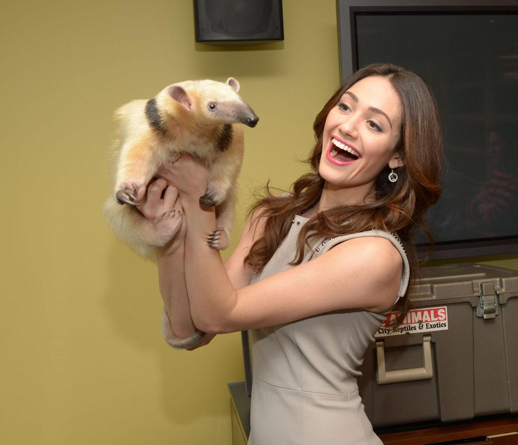 -New York, NY - 02/13/2013  Beautiful Creatures star Emmy Rossum, meets some beautiful creatures (An anteater, spider, chinchilla and porcupine) backstage at VH1 Big Morning Buzz Live with Carrie Keagan.  Also on the show was Regina King and the Harlem Globetrotters.