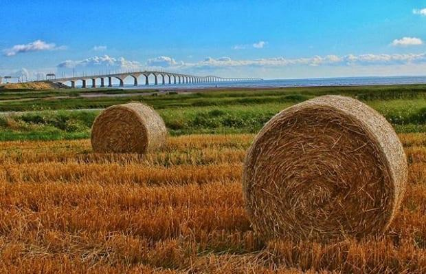 Some dairy producers are getting ready to cut their second crop of hay. (@brymay14/Instagram - image credit)
