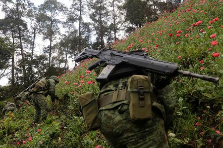Soldiers destroy an illegal opium plantation in the Sierra Madre del Sur in the southern state of Guerrero