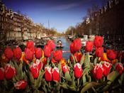 """<p>Red tulips at a market stall overlooking the canal</p><p><a class=""""link rapid-noclick-resp"""" href=""""https://www.primaholidays.co.uk/tours/netherlands-holland-tulips-cruise-adam-frost"""" rel=""""nofollow noopener"""" target=""""_blank"""" data-ylk=""""slk:CRUISE TO AMSTERDAM WITH PRIMA"""">CRUISE TO AMSTERDAM WITH PRIMA</a></p>"""