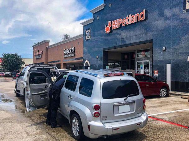 PHOTO: Two women have been arrested after allegedly stealing a 14-week French bulldog puppy worth $10,000 from a pet store in Shenandoah, Texas, on Monday, July 5, 2021. (Shenandoah Police Department/Facebook)