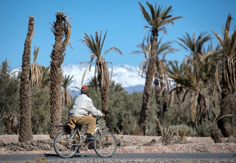 In the oasis of Skoura in Morocco's arid southeast where once pomegranate and apple trees flourished according to resident, palm trees are dying and the ground is mostly dry and cracked (AFP Photo/FADEL SENNA)