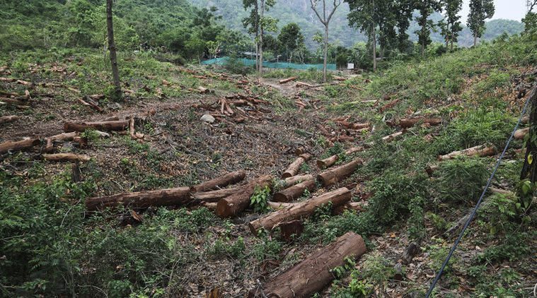 Chandigarh, Chandigarh news, Environment, Illegal tree felling,Tree felling in Chandigarh, Chandigarh tree felling, deforestation, Forest Conservation Act, National Green Tribunal, The Ministry of Environment and Forest, MoEF , Indian Express news, Latest news
