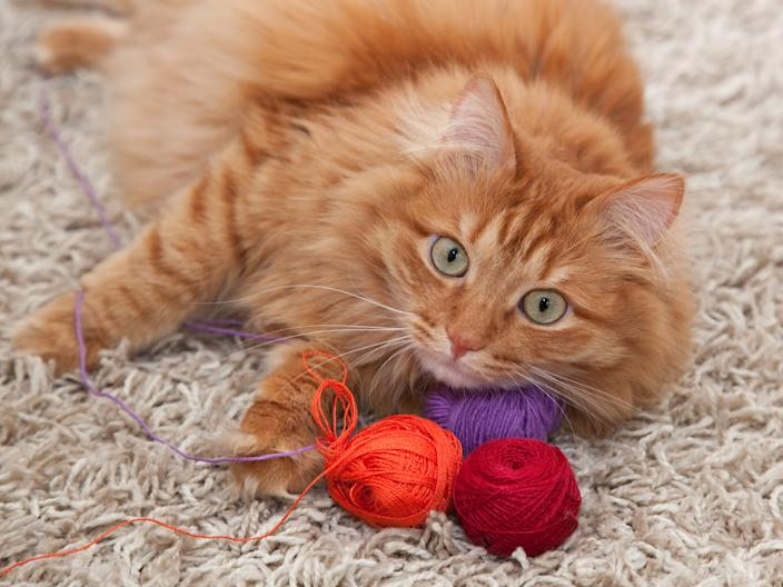 If your cat eats yarn, it could cause serious medical issues.