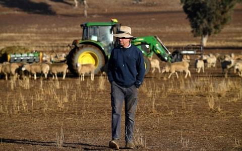 Farmer Clive Barton walking through the paddocks in the drought-hit area of Duri in New South Wales - Credit: SAEED KHAN/AFP