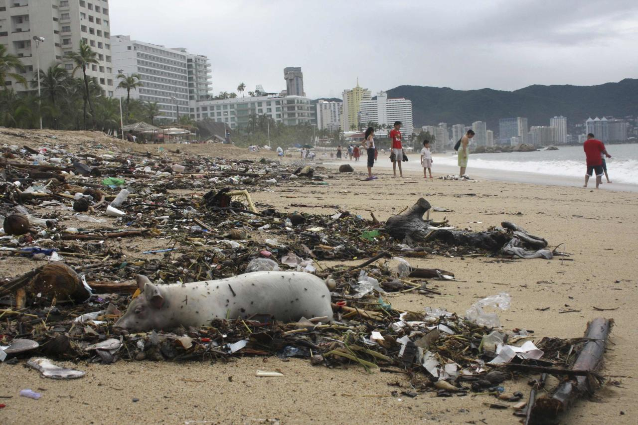 A dead pig lies among debris on a beach in Acapulco September 17, 2013. Stranded tourists salvaged belongings from submerged cars in the Mexican beach resort of Acapulco which had become a floodplain on Tuesday after some of the worst storm damage in decades killed more than 50 people across the country. A three day downpour cut off several roads in Acapulco, wrecking cars and restricting the delivery of supplies to the Pacific port city of 750,000 people where the tourist trade has suffered in recent years from a surge in drug gang violence. REUTERS/Jacobo Garcia (MEXICO - Tags: DISASTER ENVIRONMENT TRAVEL TPX IMAGES OF THE DAY)