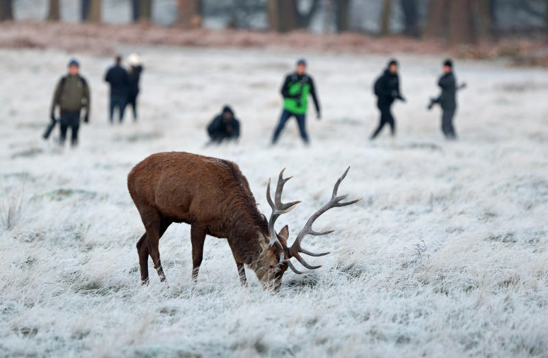 Photographers wait to take picture of a stag in a frost-covered Richmond Park in south west London where overnight temperatures dipped to -3C.