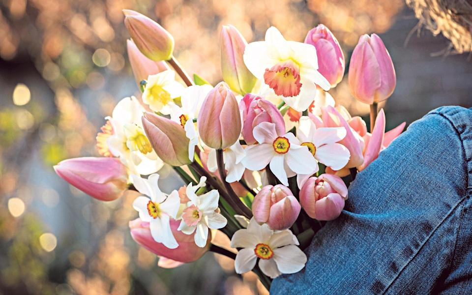 best daffodils for beautiful spring bouquets – and how to make them last longer - Jonathan Buckley