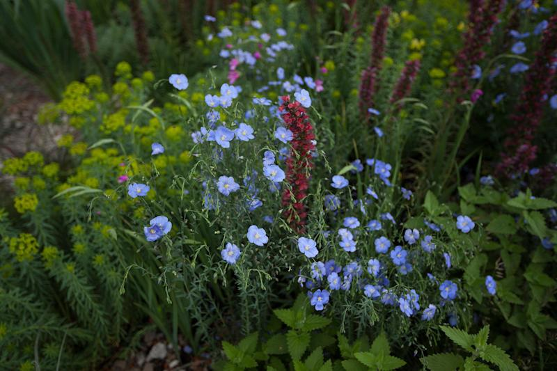 Planting in the gold medal-winning Resilience Garden, which flows from meadow to woodland, damp to dry.