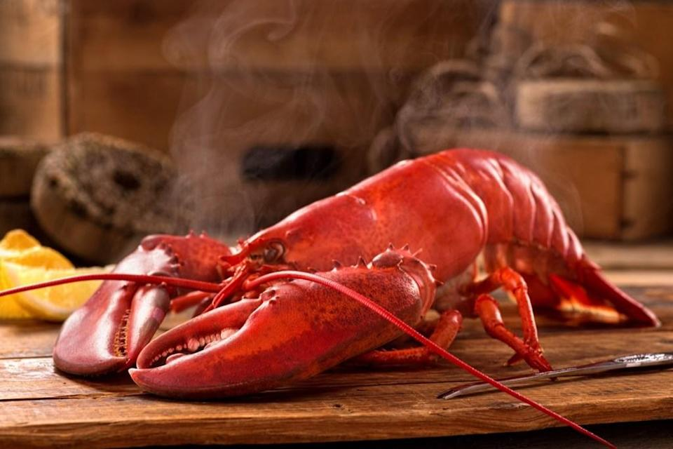 "Most of us are well aware that lobster shells change color when exposed to heat (like in a pot of boiling water, for example). But the sea creatures' blood is also intriguing. Lobster blood is initially clear and <a href=""https://study.com/academy/answer/what-color-is-lobster-blood.html"" rel=""nofollow noopener"" target=""_blank"" data-ylk=""slk:turns blue"" class=""link rapid-noclick-resp"">turns blue</a> when it hits oxygen."