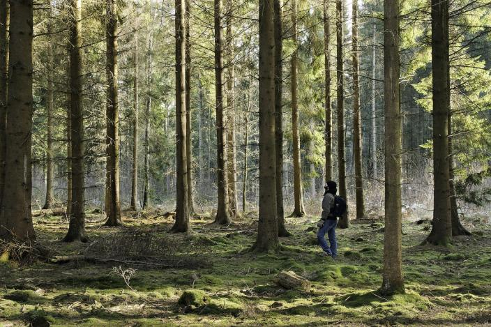 hiking outdoors forest alone
