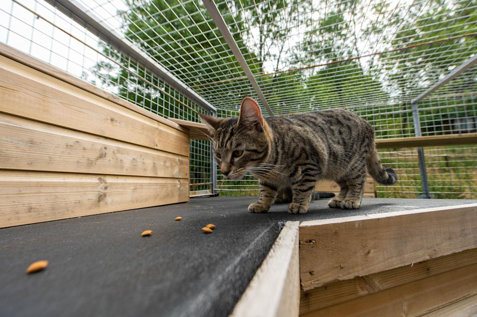 Neighbours have demanded that the cage is torn down (Picture: SWNS)