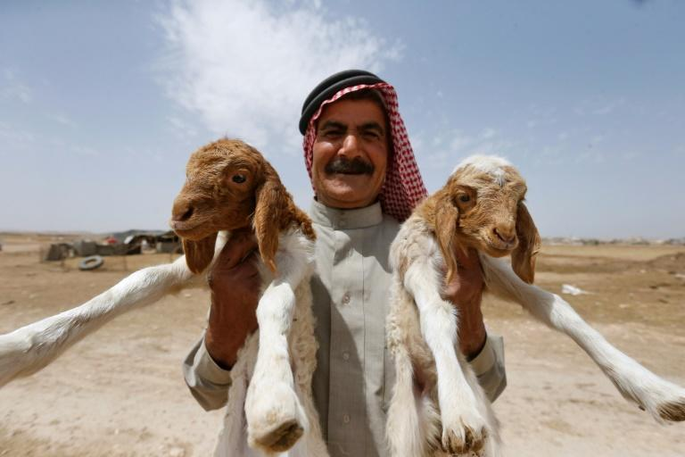 A Syrian farmer on the edge of the Badia rangelands, where shepherds can no longer graze their flocks for fear of attack