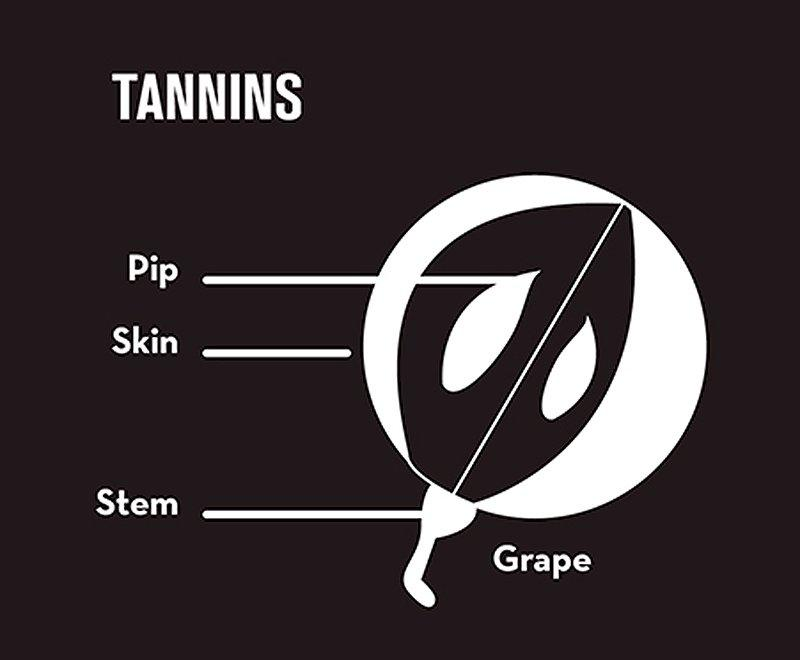 tannins beginner's guide to wine