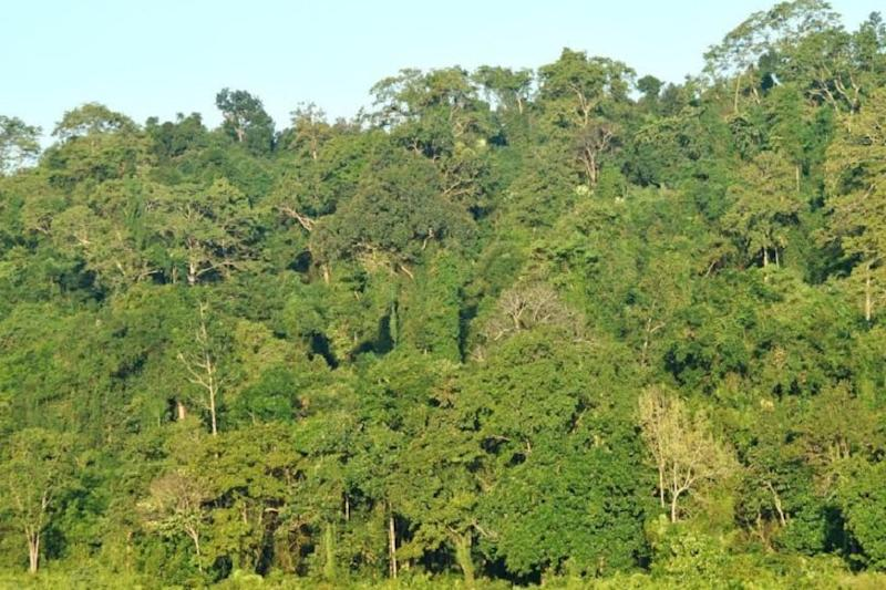 Assam to Upgrade Dehing Patkai Forest to National Park, Environmentalists Push for Area Expansion