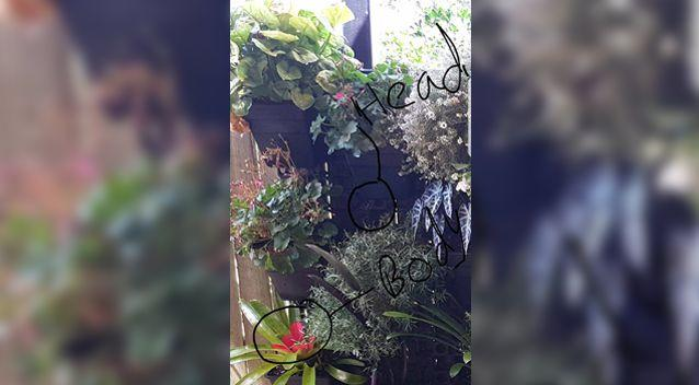 On closer inspection, a few managed to spot the snake hiding in the pot plants. Photo: THE SNAKE CATCHER 24/7 - SUNSHINE COAST
