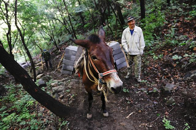 "<p>A man walks behind a mule carrying bricks up the steep path towards the Jiankou section of the Great Wall, located in Huairou District, north of Beijing, China, June 7, 2017. ""The path is too steep and the mountains are too high, so bricks can only be transported by mules,"" said local mule owner Cao Xinhua. (Photo: Damir Sagolj/Reuters) </p>"