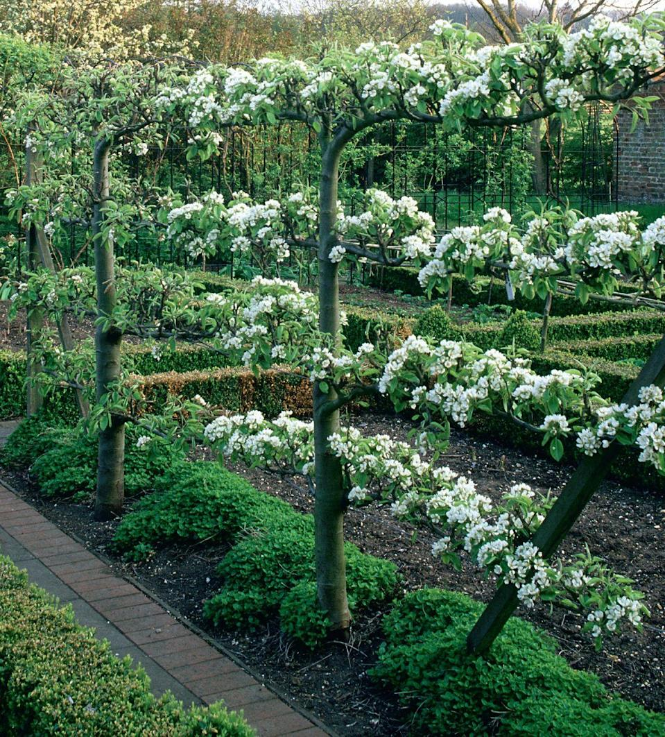 Photo credit: Glorious Gardens, by Country Living|The Garden-Collection, Andrew Lawson